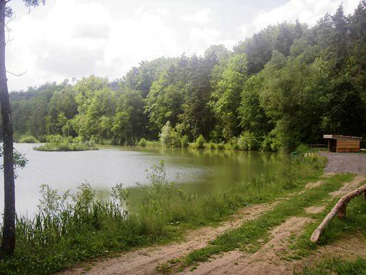 étang Val de Passey en lorraine Carpe010