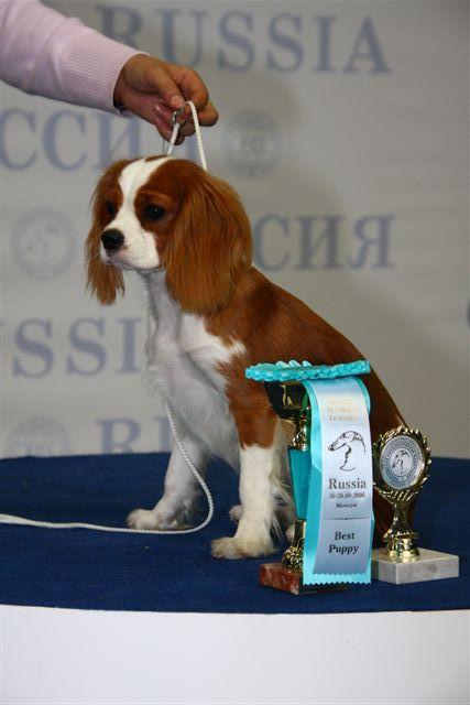 """""""РОССИЯ - 2008"""" 10561010"""