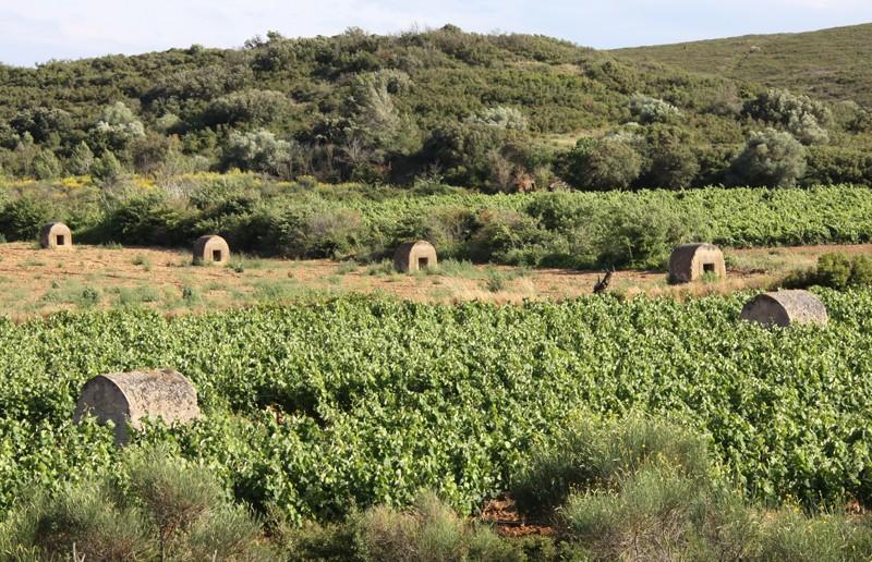 Les monjoies (= regards) de Montredon des Corbières - Aude -  France 54518910