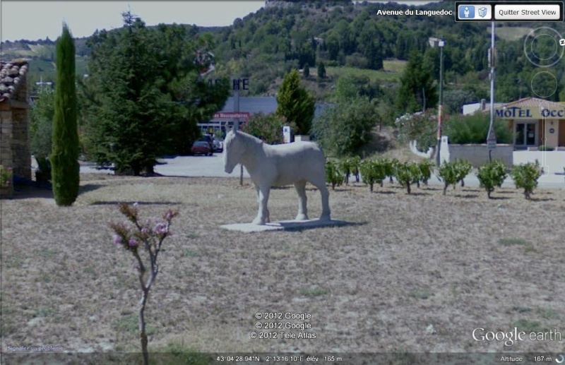 Pêchard, le cheval - Limoux - Aude - France Pechar10