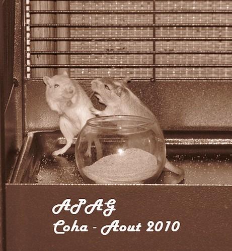 Photos de mes Coha' Img_2511