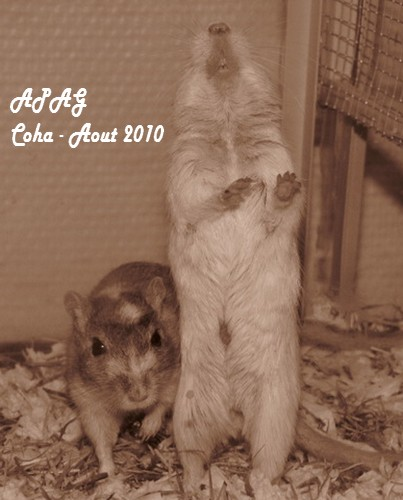 Photos de mes Coha' Img_2512