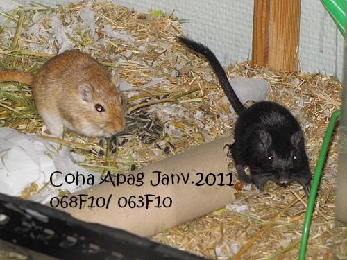 Photos de mes Coha' - Page 2 Img_5726