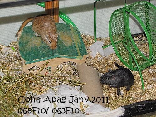 Photos de mes Coha' - Page 2 Img_5729