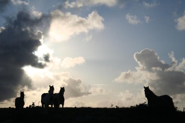 Concours Photo Février : Votre Plus Belle Photo - Page 2 Irland10