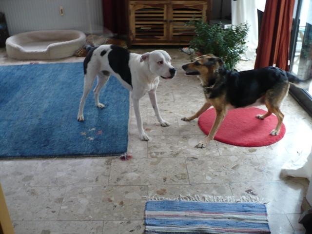 SOS pour une chienne de 11 ans !! propriétaire DECEDE - Page 3 Good_m10