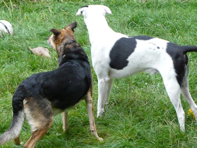 SOS pour une chienne de 11 ans !! propriétaire DECEDE - Page 3 Prunel12