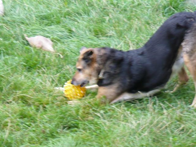 SOS pour une chienne de 11 ans !! propriétaire DECEDE - Page 3 Prunel14