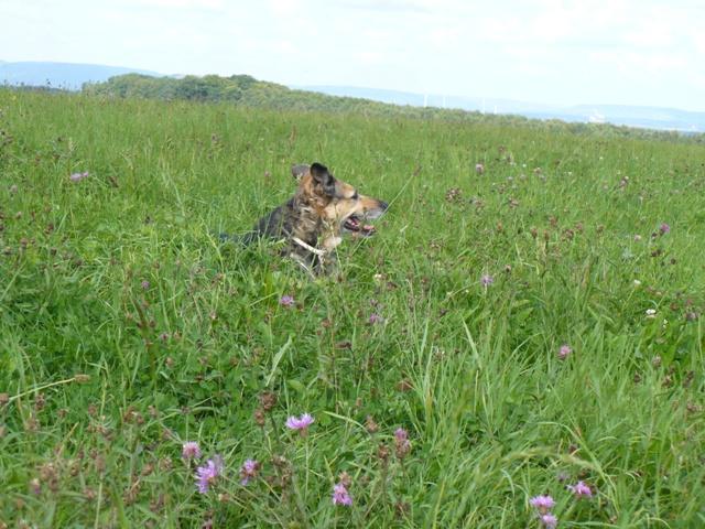 SOS pour une chienne de 11 ans !! propriétaire DECEDE - Page 3 Prunel16