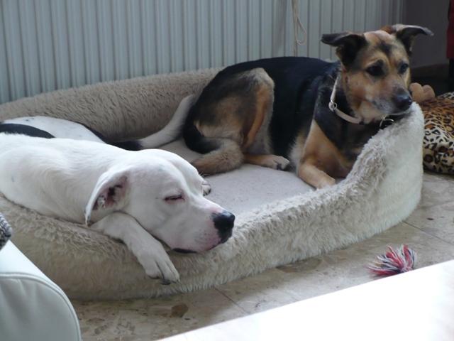 SOS pour une chienne de 11 ans !! propriétaire DECEDE - Page 3 Prunel19