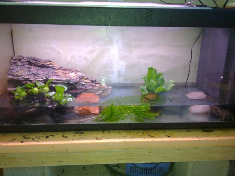 Voici mon aquarium pour mes rhinoclemmys funeréa 11072010