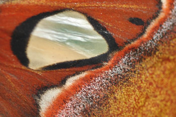 fil à papillon - Page 2 Dsc_0211
