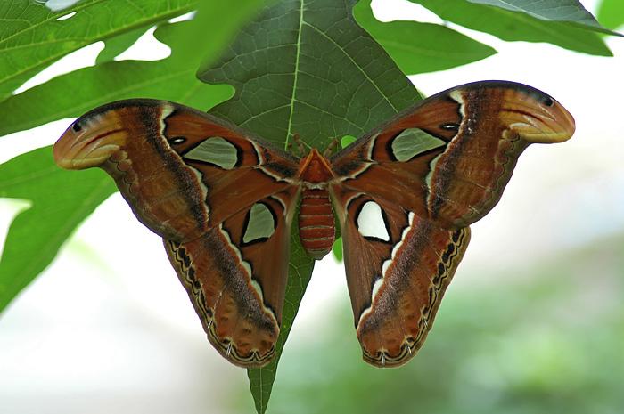 fil à papillon - Page 2 Dsc_0310