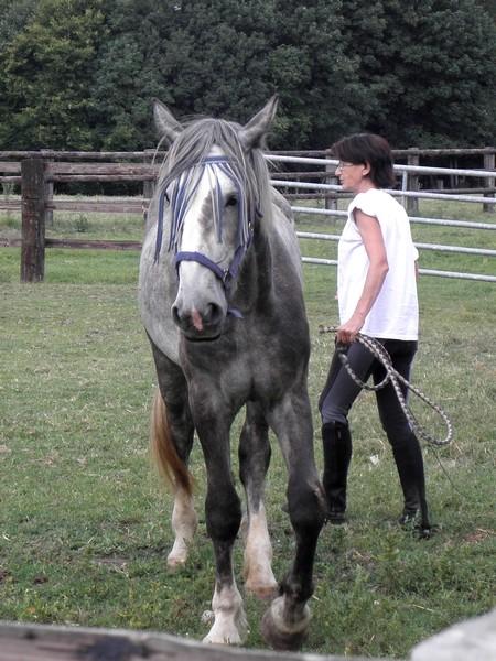 Lise, percheronne 18 mois très maigre arrivée à l'asso - Page 12 P7240025