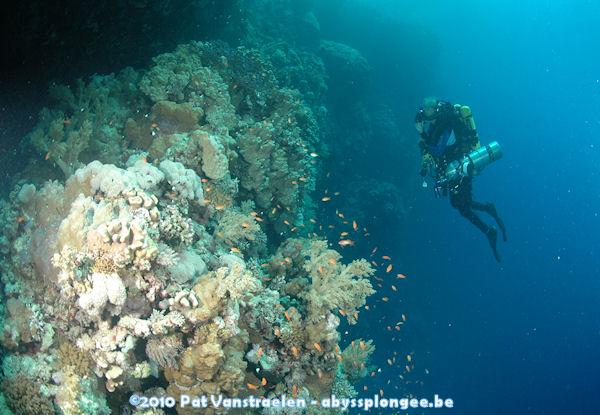 CR semaine plongée tek en CCR mer rouge avec ABYSS Dsc_0023
