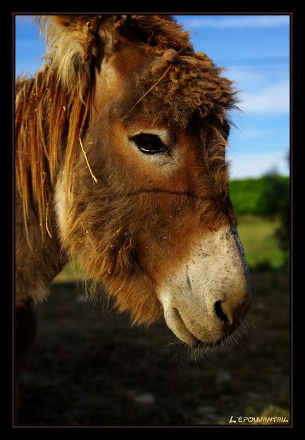 poney vs ane Imgp4013