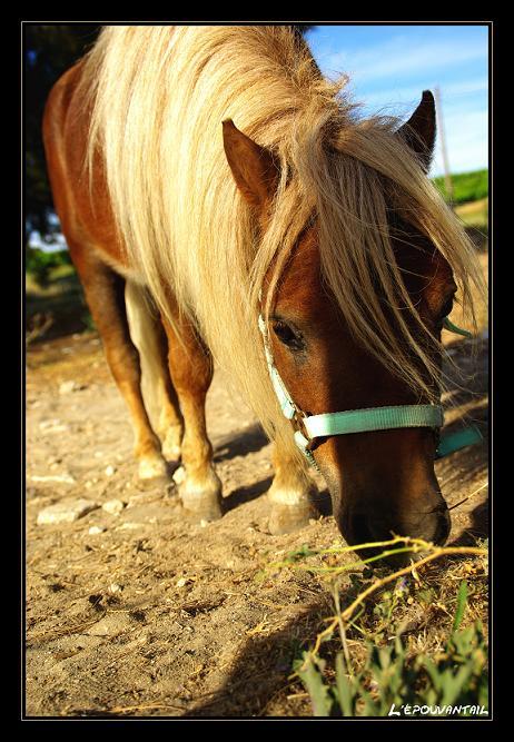 poney vs ane Imgp4017