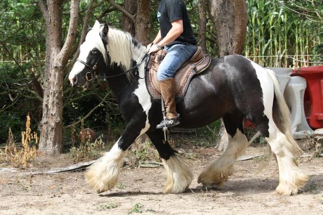 Gypsy du Prieuré - 28/11/11 Outlaw29