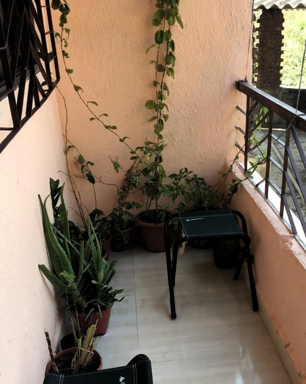Mes plantes (Vanessa11) Balcon10