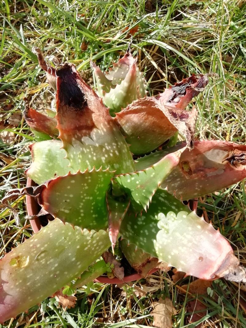 Mes plantes (Vanessa11) Img_2012