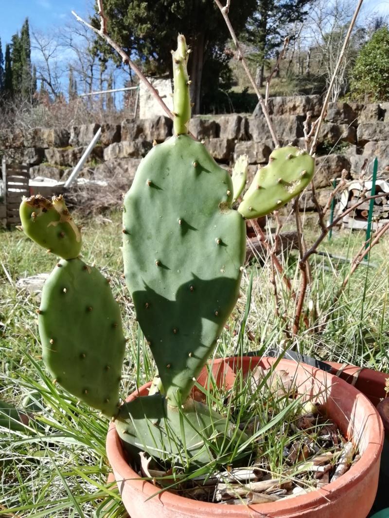 Mes plantes (Vanessa11) Img_2013