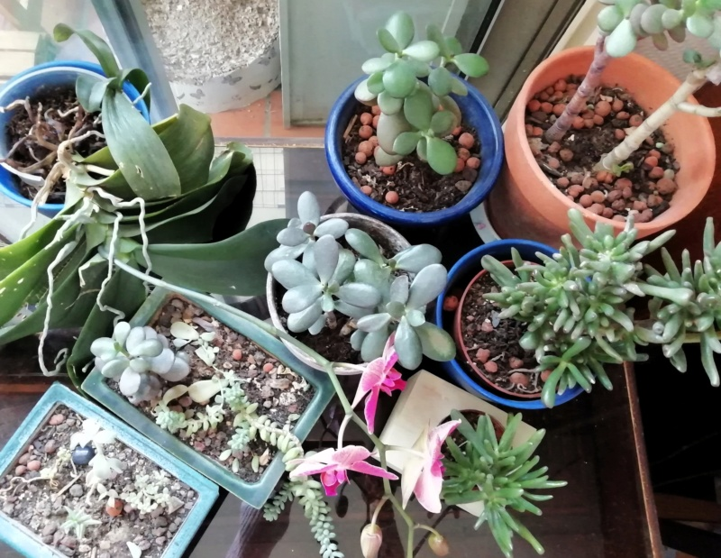 Mes plantes (Vanessa11) Plante10