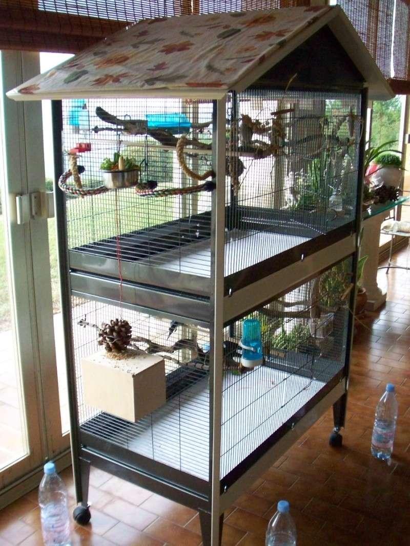 La famille s'agrandit : cages XL et volières d'intérieur 100_2012