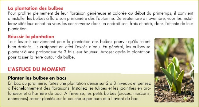Plantation de bulbes Sans_t10