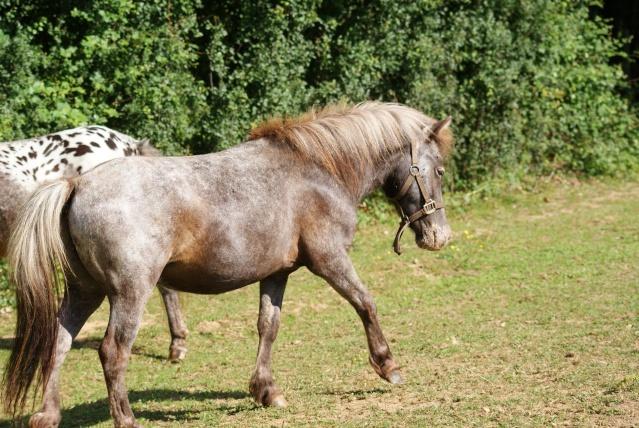 mon cheptel poney prend de la couleur :D Dsc05213