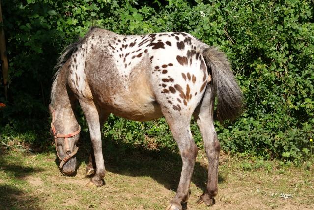 mon cheptel poney prend de la couleur :D Dsc05214