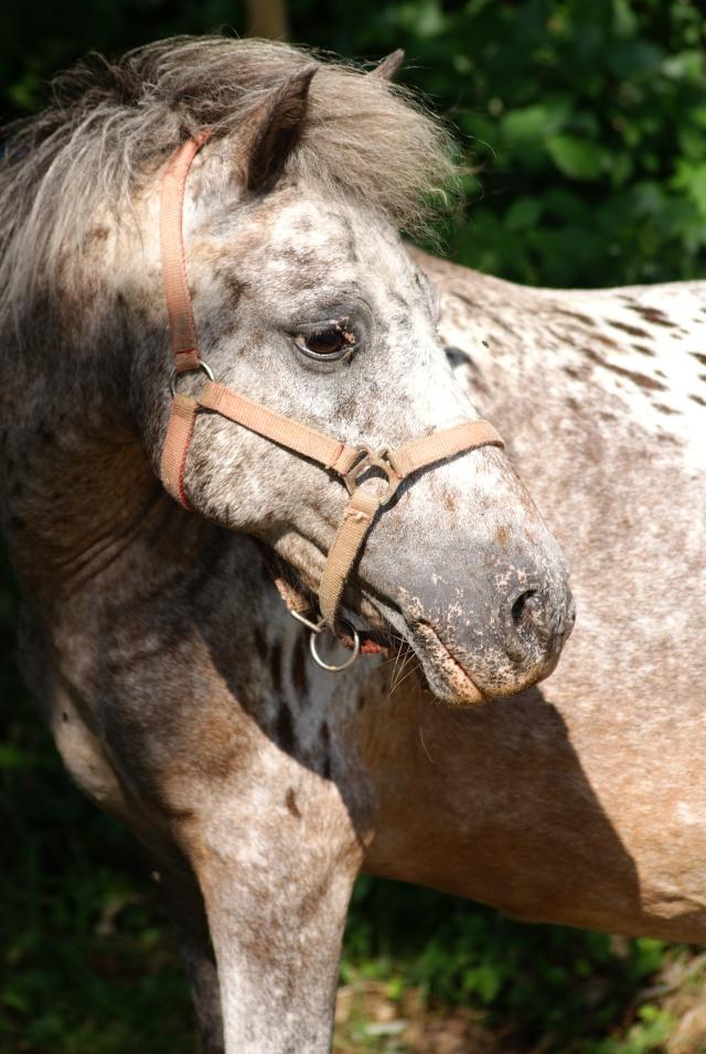 mon cheptel poney prend de la couleur :D Dsc05215