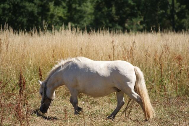 mon cheptel poney prend de la couleur :D Dsc05911