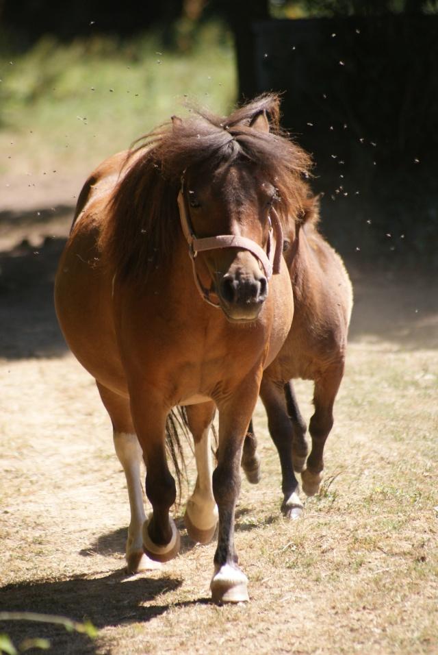 mon cheptel poney prend de la couleur :D Dsc05912
