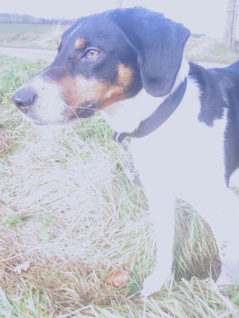 BENJI, croisé beagle mâle, 7 ans 1/2 (54) Benji_11
