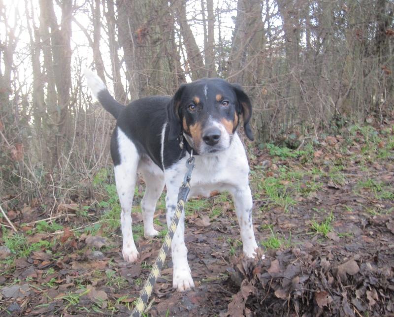 BENJI, croisé beagle mâle, 7 ans 1/2 (54) Benji_13