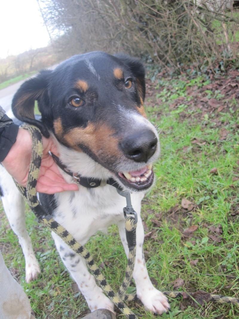 BENJI, croisé beagle mâle, 7 ans 1/2 (54) Benji_14