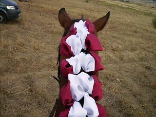 dia del caballo en villaviciosa Copia_11