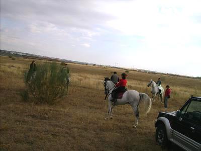 dia del caballo en villaviciosa Copia_16