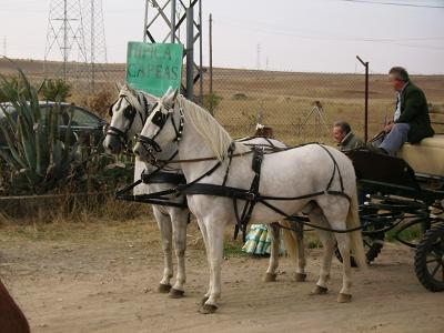 dia del caballo en villaviciosa Copia_17