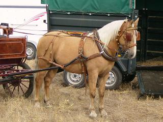 dia del caballo en villaviciosa Copia_20