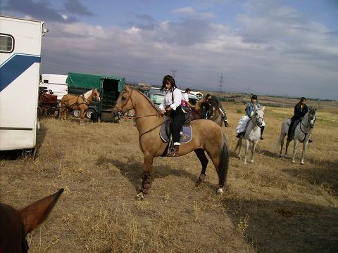 dia del caballo en villaviciosa Copia_22