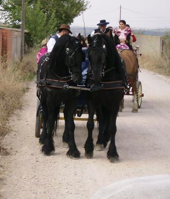 dia del caballo en villaviciosa Copia_24