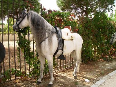 dia del caballo en villaviciosa Copia_35