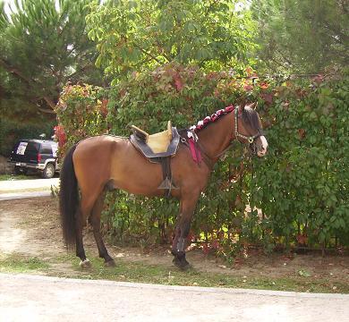 dia del caballo en villaviciosa Copia_36