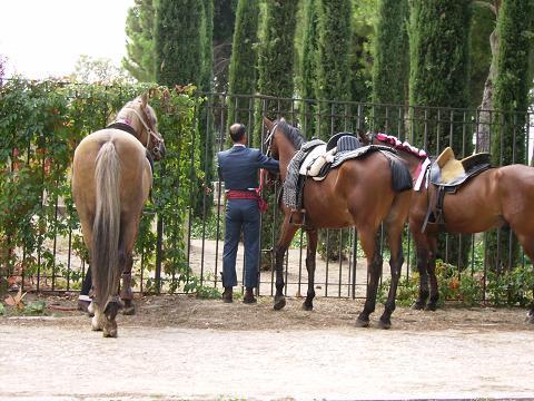 dia del caballo en villaviciosa Copia_38