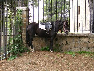 dia del caballo en villaviciosa Copia_39