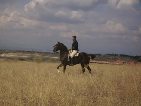 dia del caballo en villaviciosa Copia_41