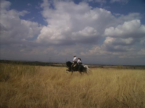 dia del caballo en villaviciosa Copia_42