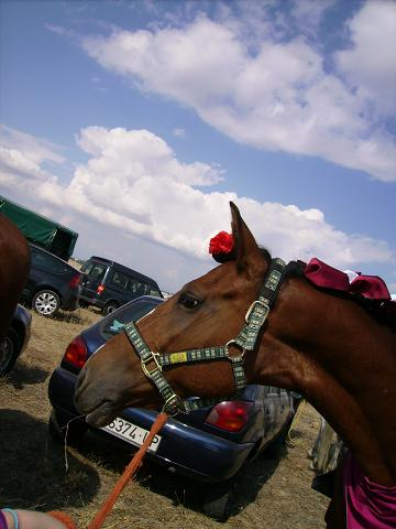 dia del caballo en villaviciosa Copia_45