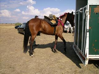 dia del caballo en villaviciosa Copia_48